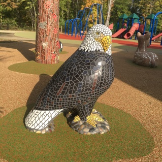 SWH_American Bald Eagle at Fletcher Creek Park, TN
